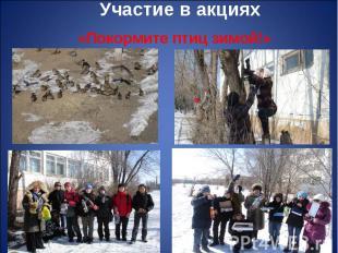 «Покормите птиц зимой!» «Покормите птиц зимой!»