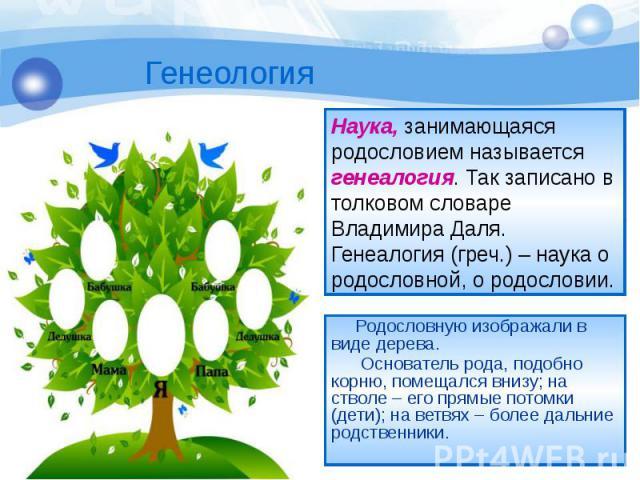 Родословную изображали в виде дерева. Родословную изображали в виде дерева. Основатель рода, подобно корню, помещался внизу; на стволе – его прямые потомки (дети); на ветвях – более дальние родственники.