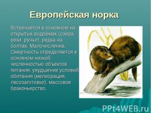Встречается в основном на открытых водоёмах (озёра, реки, ручьи), редка на болта