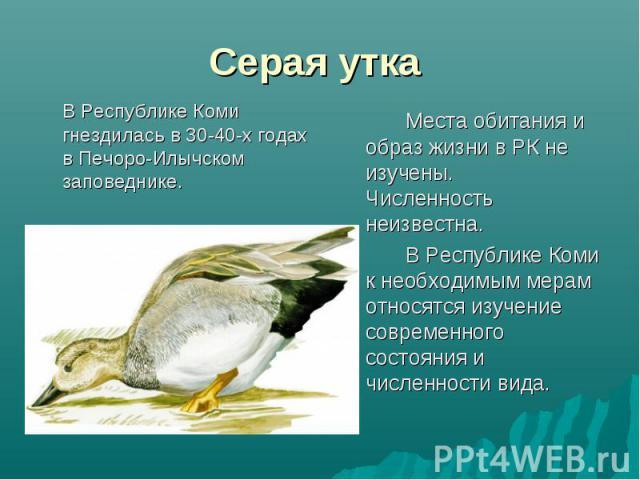 В Республике Коми гнездилась в 30-40-х годах в Печоро-Илычском заповеднике. В Республике Коми гнездилась в 30-40-х годах в Печоро-Илычском заповеднике.