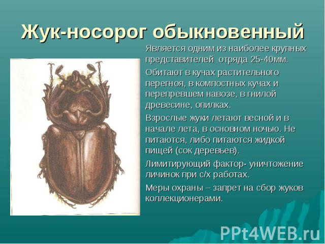 Является одним из наиболее крупных представителей отряда 25-40мм. Является одним из наиболее крупных представителей отряда 25-40мм. Обитают в кучах растительного перегноя, в компостных кучах и перепревшем навозе, в гнилой древесине, опилках. Взрослы…