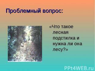 Проблемный вопрос: «Что такое лесная подстилка и нужна ли она лесу?»