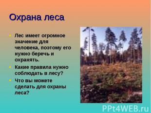 Охрана леса Лес имеет огромное значение для человека, поэтому его нужно беречь и