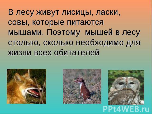 В лесу живут лисицы, ласки, совы, которые питаются мышами. Поэтому мышей в лесу столько, сколько необходимо для жизни всех обитателей