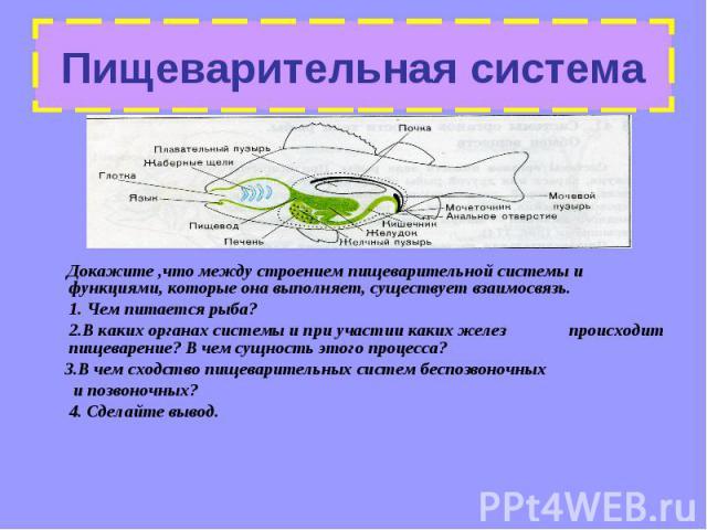 Докажите ,что между строением пищеварительной системы и функциями, которые она выполняет, существует взаимосвязь. Докажите ,что между строением пищеварительной системы и функциями, которые она выполняет, существует взаимосвязь. 1. Чем питается рыба?…