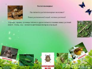 Растительноядные Как питаются растительноядные насекомые? Только растительной пи