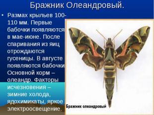 Размах крыльев 100-110 мм. Первые бабочки появляются в мае-июне. После спаривани