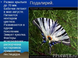 Размах крыльев до 70 мм. Бабочки летают в мае-августе. Питаются нектаром цветков