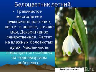Травянистое многолетнее луковичное растение, цветет в апреле, начале мая. Декора