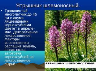 Травянистый многолетник до 45 см с двумя яйцевидными корнеклубнями. Цветет в апр