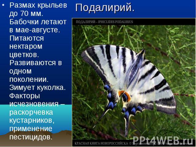 Размах крыльев до 70 мм. Бабочки летают в мае-августе. Питаются нектаром цветков. Развиваются в одном поколении. Зимует куколка. Факторы исчезновения – раскорчевка кустарников, применение пестицидов. Размах крыльев до 70 мм. Бабочки летают в мае-авг…