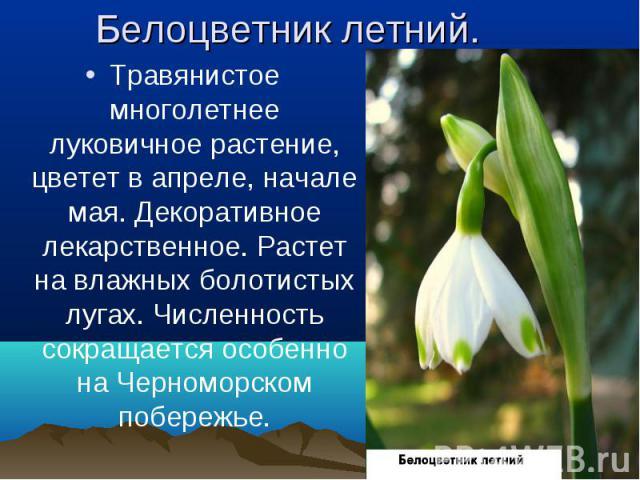 Травянистое многолетнее луковичное растение, цветет в апреле, начале мая. Декоративное лекарственное. Растет на влажных болотистых лугах. Численность сокращается особенно на Черноморском побережье. Травянистое многолетнее луковичное растение, цветет…