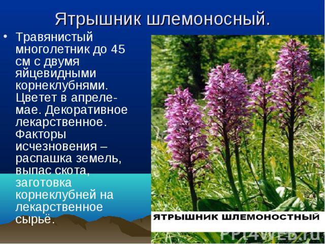 Травянистый многолетник до 45 см с двумя яйцевидными корнеклубнями. Цветет в апреле-мае. Декоративное лекарственное. Факторы исчезновения – распашка земель, выпас скота, заготовка корнеклубней на лекарственное сырьё. Травянистый многолетник до 45 см…