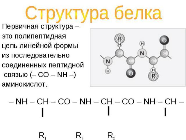Первичная структура – Первичная структура – это полипептидная цепь линейной формы из последовательно соединенных пептидной связью (– CO – NH –) аминокислот.
