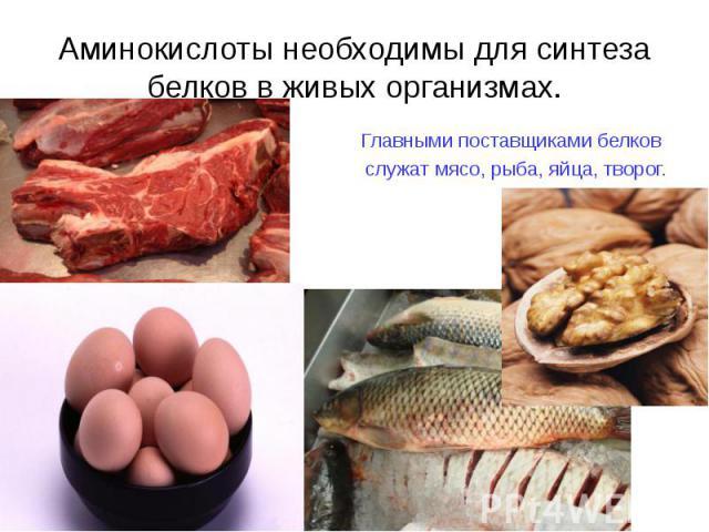 Главными поставщиками белков Главными поставщиками белков служат мясо, рыба, яйца, творог.
