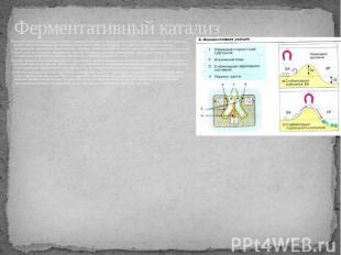 Ферментативный катализ Ферментативный катализ неразрывно связан с жизнедеятельно