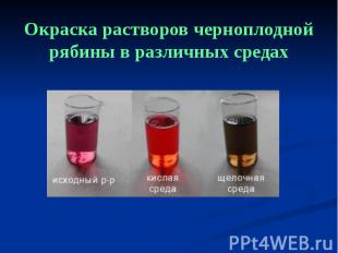 Окраска растворов черноплодной рябины в различных средах