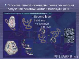 В основе генной инженерии лежит технология получения рекомбинантной молекулы ДНК