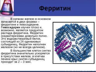 Ферритин В органах железо в основном запасается в двух формах – ферритине и гемо