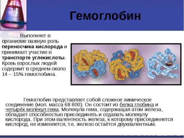 Гемоглобин Выполняет в организме важную роль переносчика кислорода и принимает участие в транспорте углекислоты. Кровь взрослых людей содержит в среднем около 14 – 15% гемоглобина.