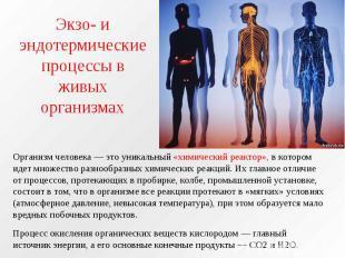 Экзо- и эндотермические процессы в живых организмах Организм человека — это уник