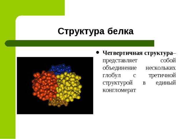 Четвертичная структура– представляет собой объединение нескольких глобул с третичной структурой в единый конгломерат Четвертичная структура– представляет собой объединение нескольких глобул с третичной структурой в единый конгломерат
