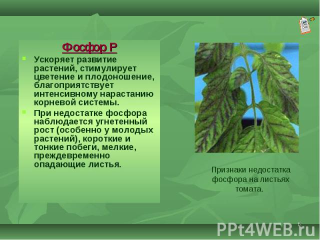 Фосфор Р Фосфор Р Ускоряет развитие растений, стимулирует цветение и плодоношение, благоприятствует интенсивному нарастанию корневой системы. При недостатке фосфора наблюдается угнетенный рост (особенно у молодых растений), короткие и тонкие побеги,…