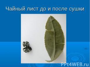 Чайный лист до и после сушки