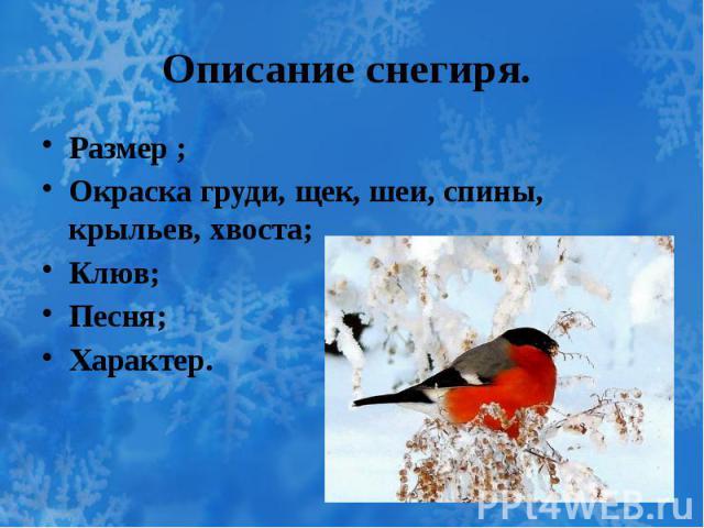Описание снегиря. Размер ; Окраска груди, щек, шеи, спины, крыльев, хвоста; Клюв; Песня; Характер.