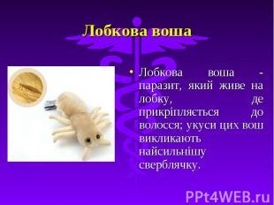 Лобкова воша Лобкова воша - паразит, який живе на лобку, де прикріпляється до во