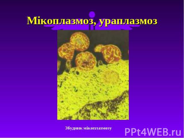 Мікоплазмоз, ураплазмоз