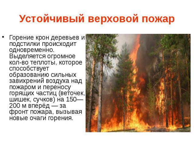 Устойчивый верховой пожар Горение крон деревьев и подстилки происходит одновременно. Выделяется огромное кол-во теплоты, которое способствует образованию сильных завихрений воздуха над пожаром и переносу горящих частиц (веточек, шишек, сучков) на 15…