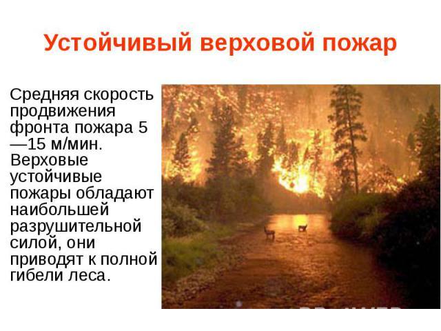 Устойчивый верховой пожар Средняя скорость продвижения фронта пожара 5—15 м/мин. Верховые устойчивые пожары обладают наибольшей разрушительной силой, они приводят к полной гибели леса.