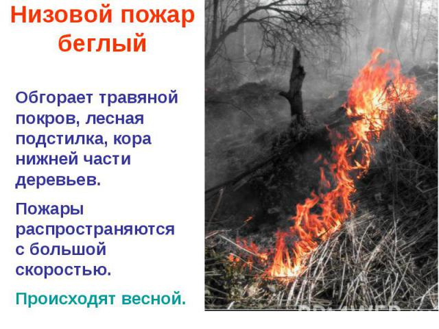 Низовой пожар беглый