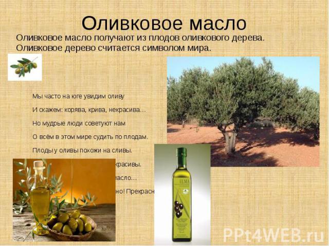 Оливковое масло Оливковое масло получают из плодов оливкового дерева. Оливковое дерево считается символом мира. Мы часто на юге увидим оливу И скажем: корява, крива, некрасива… Но мудрые люди советуют нам О всём в этом мире судить по плодам. Плоды у…
