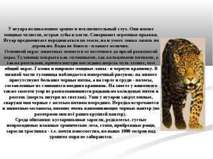 У ягуара великолепное зрение и исключительный слух. Они имеют мощные челюсти, ос