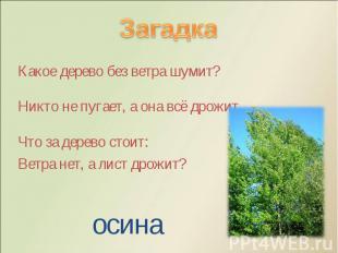 Какое дерево без ветра шумит? Какое дерево без ветра шумит? Никто не пугает, а о