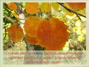 Осенью листья осины раскрашиваются всеми цветами радуги и придают удивительную ж