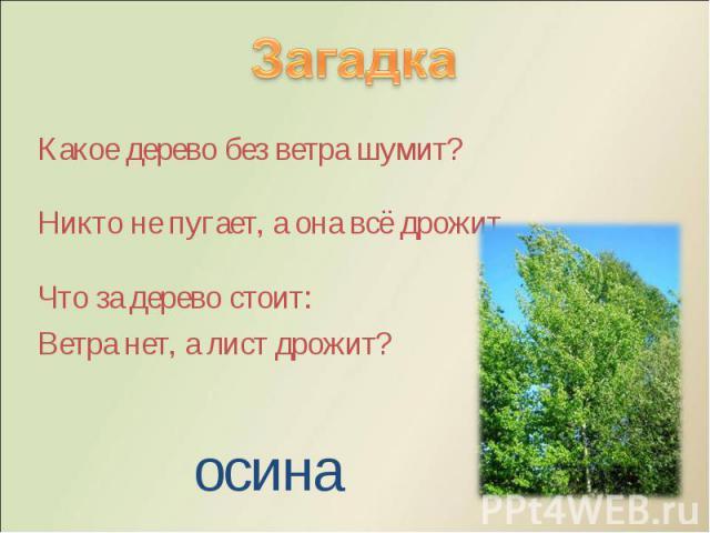 Какое дерево без ветра шумит? Какое дерево без ветра шумит? Никто не пугает, а она всё дрожит. Что за дерево стоит: Ветра нет, а лист дрожит?