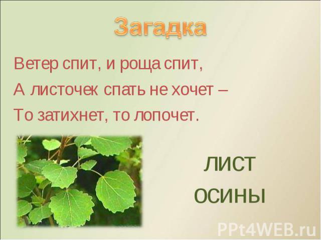Ветер спит, и роща спит, Ветер спит, и роща спит, А листочек спать не хочет – То затихнет, то лопочет.