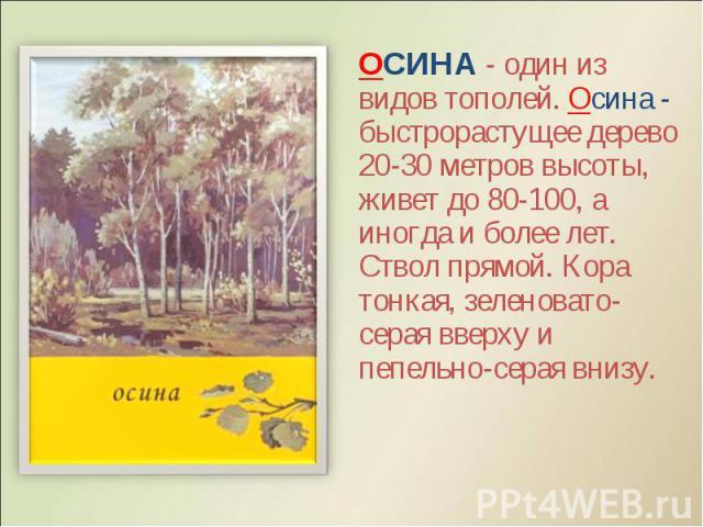 ОСИНА - один из видов тополей. Осина - быстрорастущее дерево 20-30 метров высоты, живет до 80-100, а иногда и более лет. Ствол прямой. Кора тонкая, зеленовато-серая вверху и пепельно-серая внизу. ОСИНА - один из видов тополей. Осина - быстрорастущее…