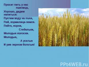 Просит пить у нас пшеница, Просит пить у нас пшеница, Хорошо, дадим напиться: Пу