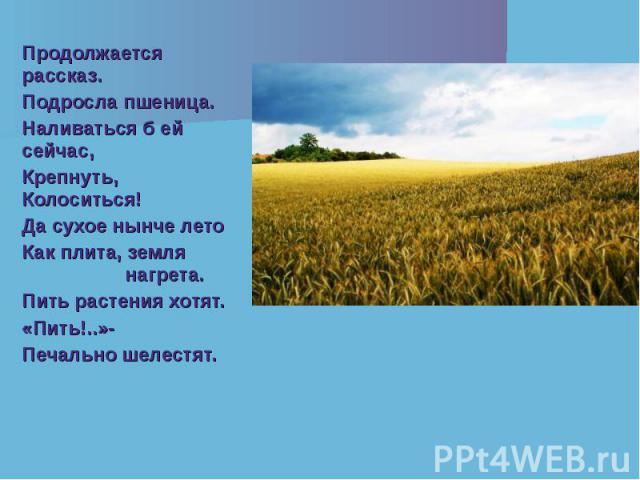 Продолжается рассказ. Продолжается рассказ. Подросла пшеница. Наливаться б ей сейчас, Крепнуть, Колоситься! Да сухое нынче лето Как плита, земля нагрета. Пить растения хотят. «Пить!..»- Печально шелестят.