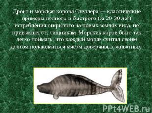 Дронт и морская корова Стеллера — классические примеры полного и быстрого (за 20