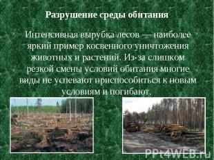 Разрушение среды обитания Интенсивная вырубка лесов — наиболее яркий пример косв