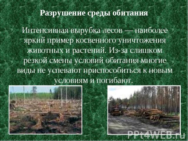 Разрушение среды обитания Интенсивная вырубка лесов — наиболее яркий пример косвенного уничтожения животных и растений. Из-за слишком резкой смены условий обитания многие виды не успевают приспособиться к новым условиям и погибают.