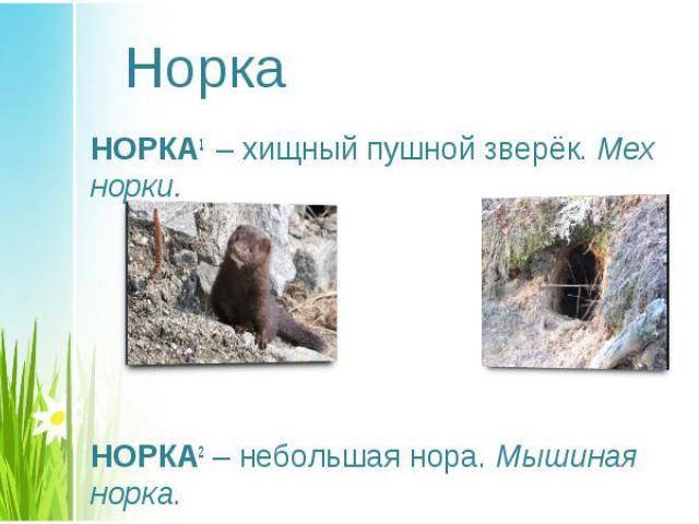 НОРКА1 – хищный пушной зверёк. Мех норки. НОРКА1 – хищный пушной зверёк. Мех норки. НОРКА2– небольшая нора. Мышиная норка.