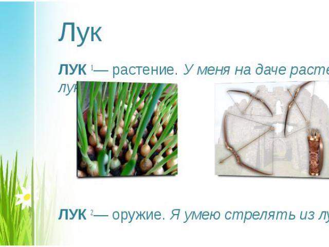 ЛУК1— растение. У меня на даче растет лук. ЛУК1— растение. У меня на даче растет лук. ЛУК2— оружие. Я умею стрелять из лука.