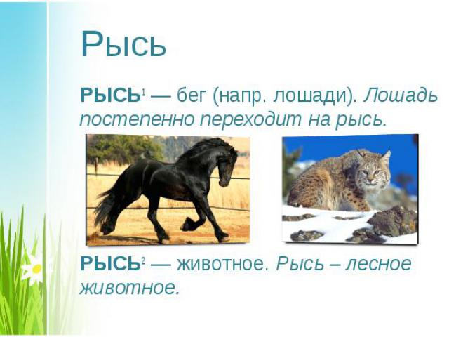 РЫСЬ1— бег (напр. лошади). Лошадь постепенно переходит на рысь. РЫСЬ1— бег (напр. лошади). Лошадь постепенно переходит на рысь. РЫСЬ2— животное. Рысь – лесное животное.