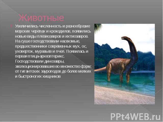 Животные Увеличились численность и разнообразие морских черепах и крокодилов, появились новые виды плезиозавров и ихтиозавров. На суше господствовали насекомые, предшественники современных мух, ос, уховерток, муравьев и пчел. Появилась и первая птиц…